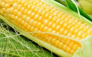 maíz (1)